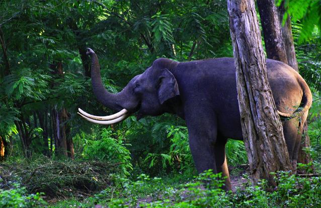 Itanagar-Wildlife-Sanctuary